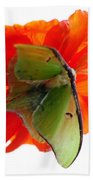 Luna Moth Poppy High Key Beach Towel