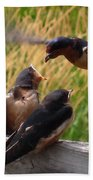 Lunch Is Served To The Fourth Baby Barn Swallow Beach Towel