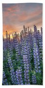 Lupine Dawn Beach Towel