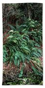 Lush Ferns Of The Forest Beach Towel