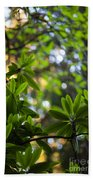 Lush Rhododendron Forest Beach Towel