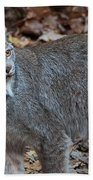 Lynx Eyes Beach Towel