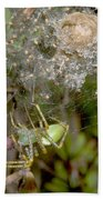 Lynx Spider And Young Beach Towel