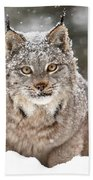 Lynx Stare Beach Towel