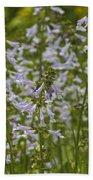 Lyreleaf Sage Wildflowers - Salvia Lyrata Beach Towel