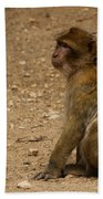 Macaque Monkeys Beach Towel