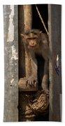 Macaque Peeking Out Beach Towel