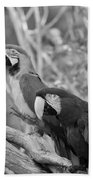 Macaws Of Color B W 14 Beach Towel