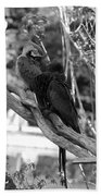Macaws Of Color B W 15 Beach Towel