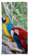 Macaws Of Color23 Beach Towel