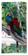Macaws Of Color24 Beach Towel
