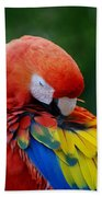 Macaws Of Color26 Beach Towel