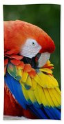Macaws Of Color28 Beach Towel