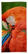Macaws Of Color29 Beach Towel