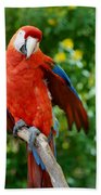 Macaws Of Color30 Beach Towel