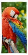 Macaws Of Color31 Beach Towel