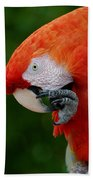 Macaws Of Color32 Beach Towel