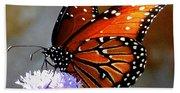 Macro Butterfly Beach Towel
