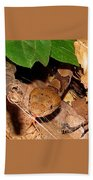 Macro Copperhead Beach Towel