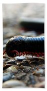 Macro  Millipede Beach Towel