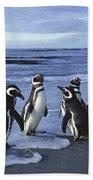 Magellanic Penguin Trio On Beach Beach Towel