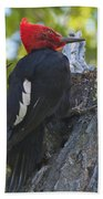 Magellanic Woodpecker Beach Towel