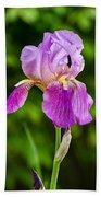 Magenta Iris Profile Beach Towel