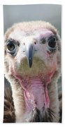 Maggee The Hooded Vulture Beach Towel