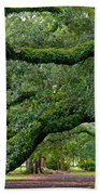 Magnificent Oak Alley Tree Beach Towel