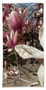 Magnolia Branches Beach Towel