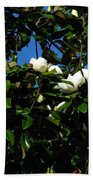 Magnolia Setting Beach Towel