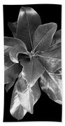 Magnolia Tree Leaves Beach Towel