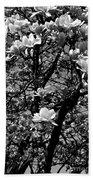 Magnolias In White Beach Towel