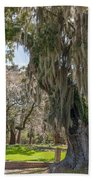 Majestic Live Oak Tree Beach Towel