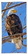 Majestic Bald Eagle Beach Sheet by Greg Norrell