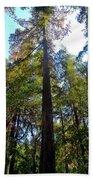 Majestic Trees Beach Towel