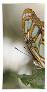 Malachite Butterfly Beach Towel