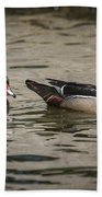 Male Adult Wood Ducks Beach Towel