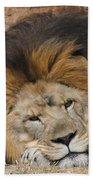 Male African Lion Beach Towel