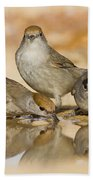Male And Female Eurasian Blackcaps Beach Towel