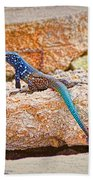 Male Bonaire Whiptail Lizard Beach Towel