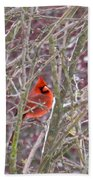 Male Cardinal Cold Day 2 Beach Towel