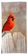 Male Cardinal Beach Towel
