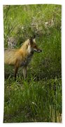 Male Fox   #3521 Beach Towel