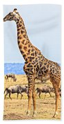 Male Giraffe Posing  Beach Towel by Perla Copernik