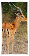 Male Impala With Horns Beach Towel