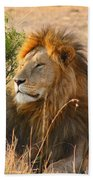 Male Lion Beach Towel