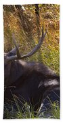 Male Moose   #3865 Beach Towel