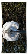 Male Mute Swan Beach Towel