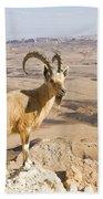 Male Nubian Ibex Capra Ibex Nubiana 1 Beach Towel